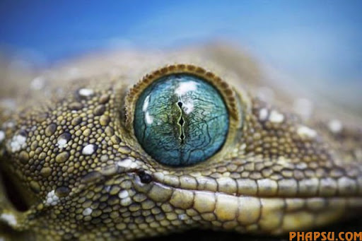 animal_eyes_640_07.jpg