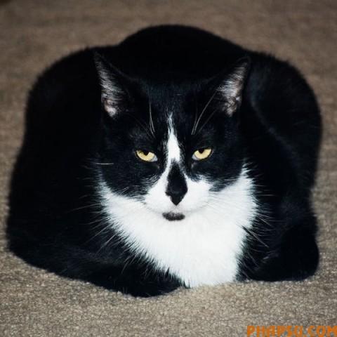 fatty_cats_640_57.jpg