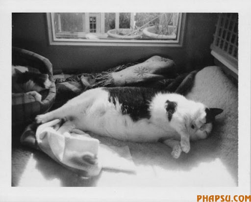 fatty_cats_640_33.jpg