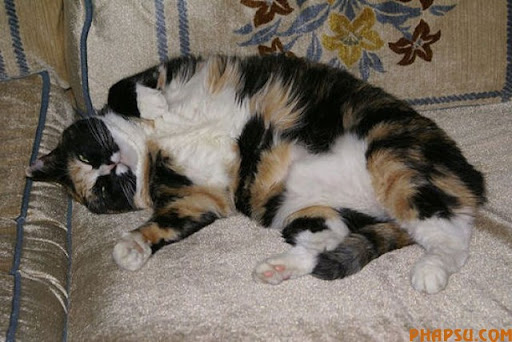 fatty_cats_640_39.jpg