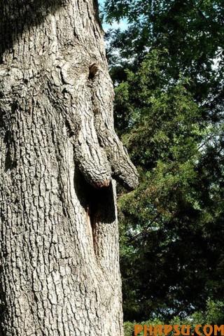 tree_22.jpg
