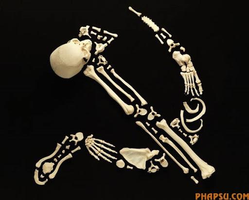 ssssr-bones.jpg