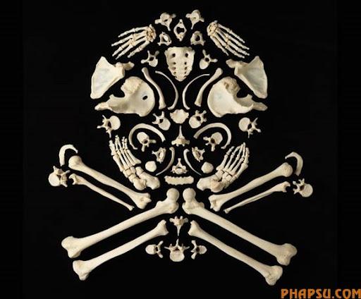 skull-bones.jpg