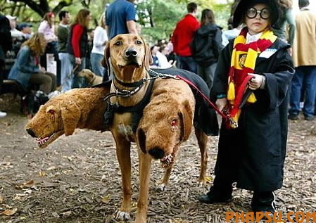 a97115_g079_3-harry-potter.jpg