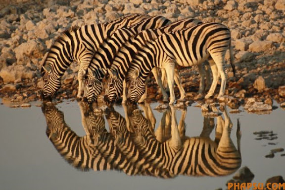striking_reflective_photography_640_21.jpg