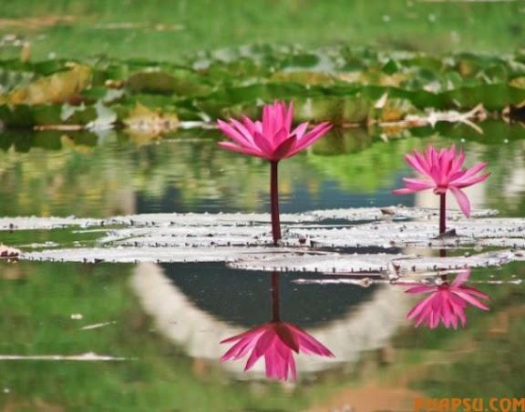 striking_reflective_photography_640_29.jpg