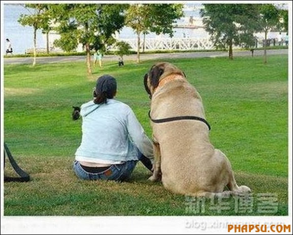 the-biggest-dogs02.jpg
