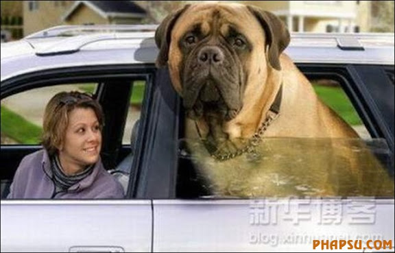 the-biggest-dogs09.jpg