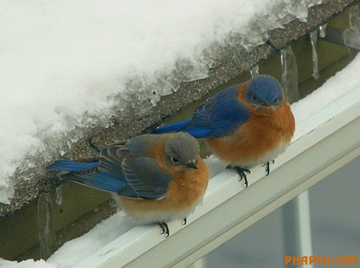 winter_frozencoldbirds_001.jpg