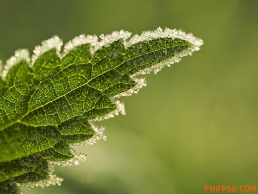 winter_frozenleaf_001.jpg
