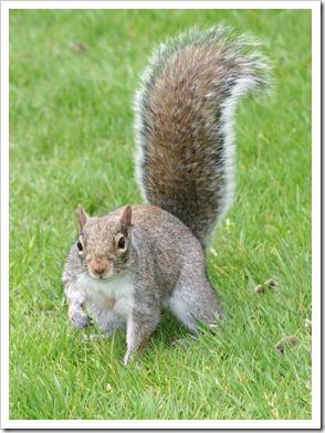 squirrel budy