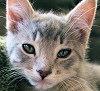 Gumdrop_closeup