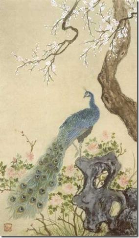 350_peacock