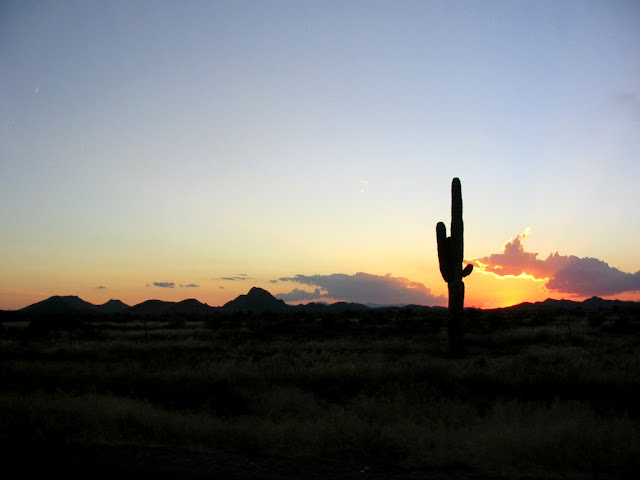 Saguaro cactus in Arizona at sunset