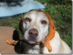 Orla warms the ears...