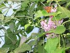23_Butterfly.jpg