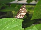 31_Butterfly_Heaven.jpg