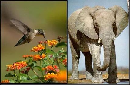 beija-flor e elefante
