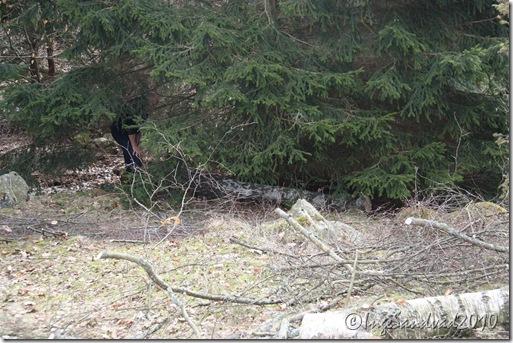huset i skoven og træ arbejde 001