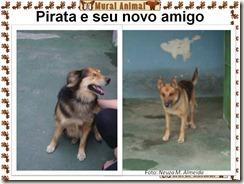 cao_pirata05