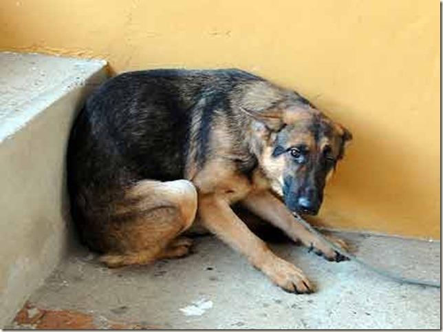 cachorro-adestradorG