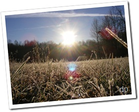 frosty grass with sun