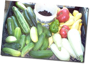 produce 010