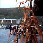 LaSalles Market Halloween Decorations