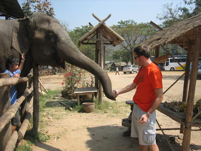 U słoników
