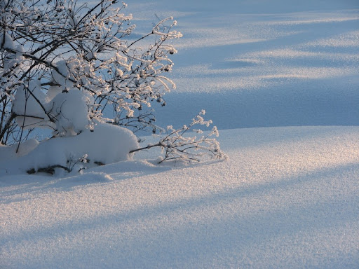 Lumi.jpg
