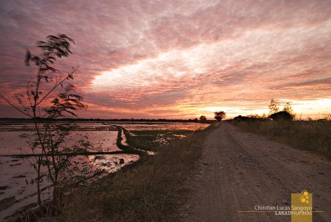 Buliran Ricefield Sunset