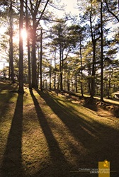 Camp John Hay pine trees
