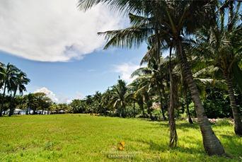 The Grassy Fields of Malcapuya Island