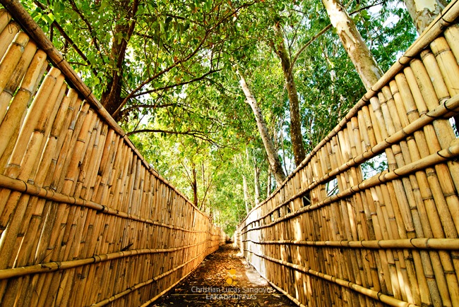 The Fenced Trail at the Candaba Swamp - Inspired by Ferdz Decena's Photo of the same place =P