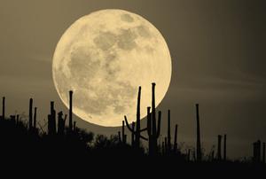 चंद्रमा की कविता