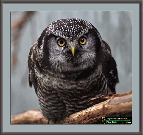 búhos imagenesifotos (2)
