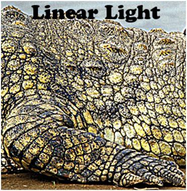 Linear Light