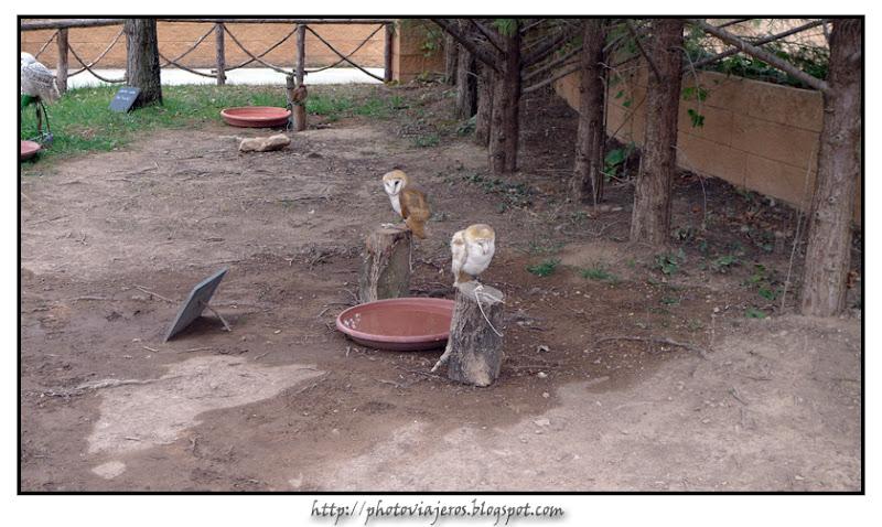 Exposición aves rapaces