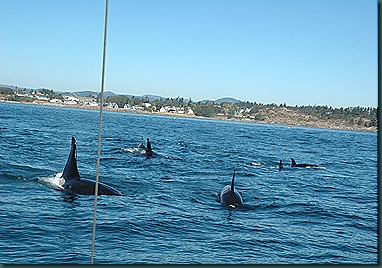 whales 184