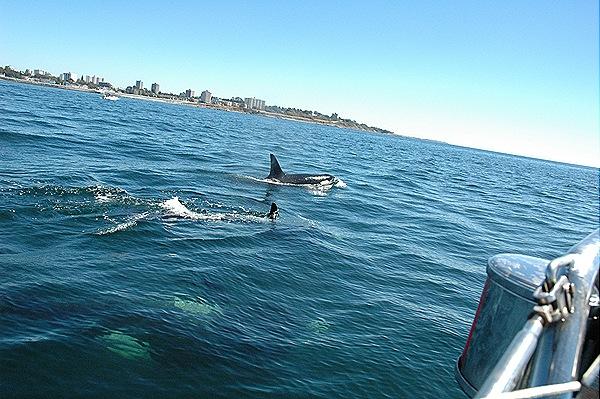 [whales 189[6].jpg]