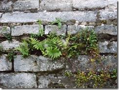 Древние каменные стены