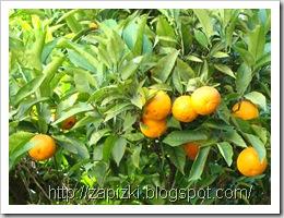 Знаменитые каннские мандарины - главный предмет гордости горожан :)