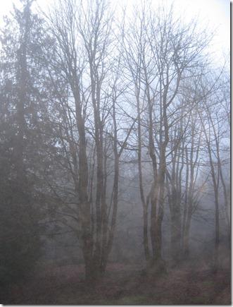 Winter 079
