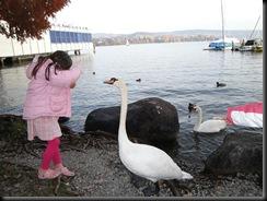 SwanFeeding2