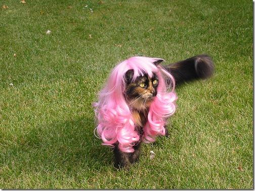 fotos de animais fofos e engraçados more freak show blog (9)