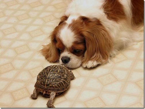 fotos de animais fofos e engraçados more freak show blog (24)