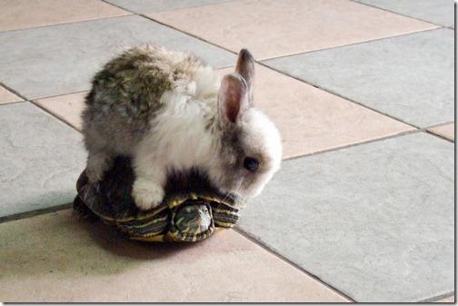 fotos de animais fofos e engraçados more freak show blog (28)