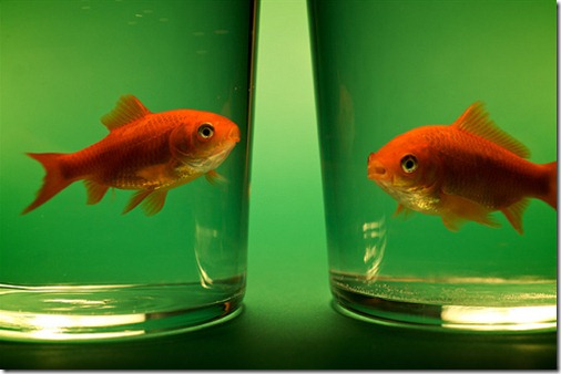 more freak show foto arte peixes fish (1)