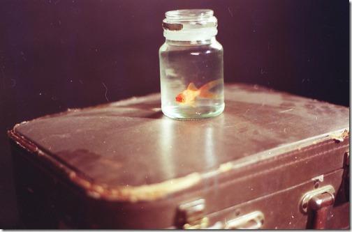 more freak show foto arte peixes fish (4)