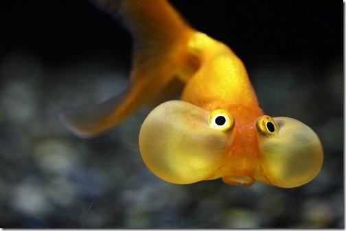 more freak show foto arte peixes fish (9)